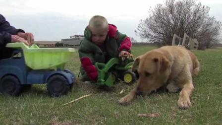 男童走失忠犬一路跟随保护 用身体为小主人保暖