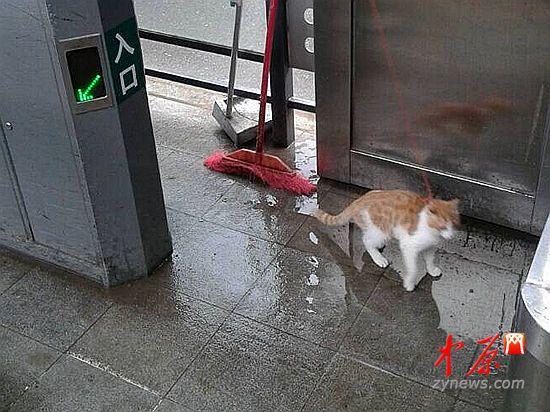 棉纺路站台被遗弃的小猫