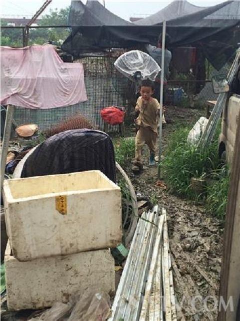 南京一对兄妹垃圾堆中与狗同吃同住